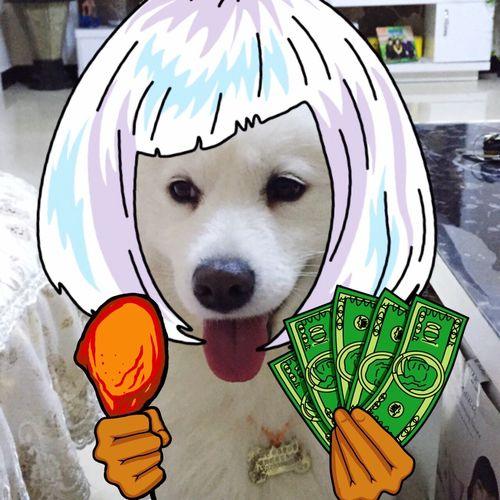 Hi! Dog Dog Dog 💕 My Pets♥ HAHAHAHAHAHA Relaxing Hello World