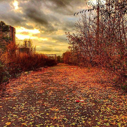 Autumn 🍂🍂🍂