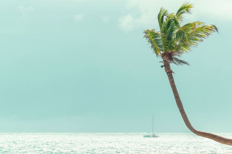 Plant Palm Tree Tree Nature Sea Water Sky Tropical Climate Beauty In Nature Day Tranquility Growth Tranquil Scene Outdoors Scenics - Nature Land Trunk Tree Trunk Horizon Over Water No People Coconut Palm Tree Tropical Tree Turquoise Colored Catamaran Boat