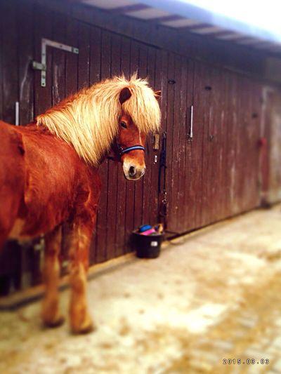 Love ️️️horses ❤️ Pferde Pony Horses Love Horses