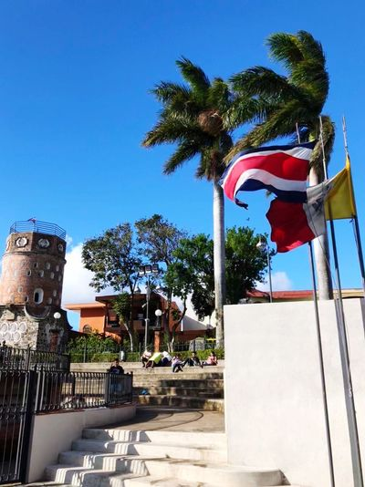 Banderas Vailando Al Son Del Viento Tree Day Sunlight Blue No People Clear Sky Outdoors Flag Palm Tree Sky