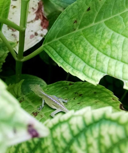 GreenFriend EyeEmNature Lover Babylizzard Hanging Out Disguised Eyeemgarden