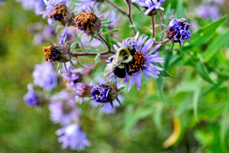 Bee HDR Collection Check This Out Nikon Dslr