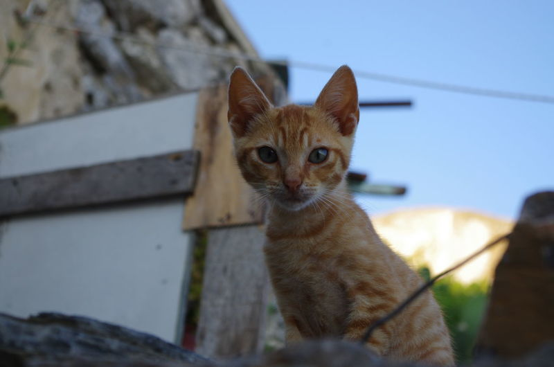 GREECE ♥♥ Griechenland Griechische Inseln Amorgos Amorgosisland Animal Themes Architecture Cat Close-up Day Domestic Animals Domestic Cat Feline Focus On Foreground Greece Looking At Camera Mammal Nature No People One Animal Outdoors Pets Portrait Sitting Whisker