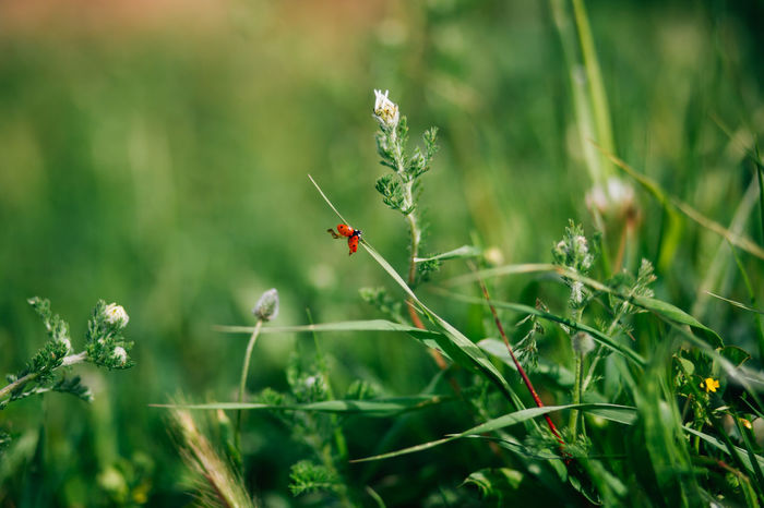 Animal Animal Behavior Animal Themes Animal Wildlife Animals In The Wild Beauty In Nature Buzzing Close-up Day Flower Flowers Insect Ladybug Nature No People One Animal Outdoors Plant Spider Web Web