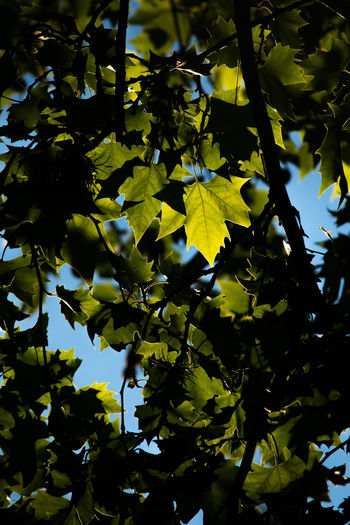 Plant Growth Tree Beauty In Nature No People Nature Plant Part Branch Leaf Day Low Angle View Close-up Tranquility Outdoors Green Color Full Frame Sunlight Yellow Backgrounds Sky