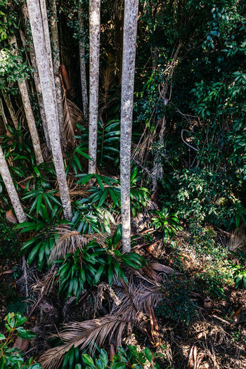 Mount Tamborine National Park, Queensland, Australia Mount Tamborine Beauty In Nature Day Field Forest Green Color Growth Land Leaf Nature No People Non-urban Scene Outdoors Plant Plant Part Queensland Rainforest Tranquil Scene Tranquility Tree Tree Trunk Tropical Trunk WoodLand