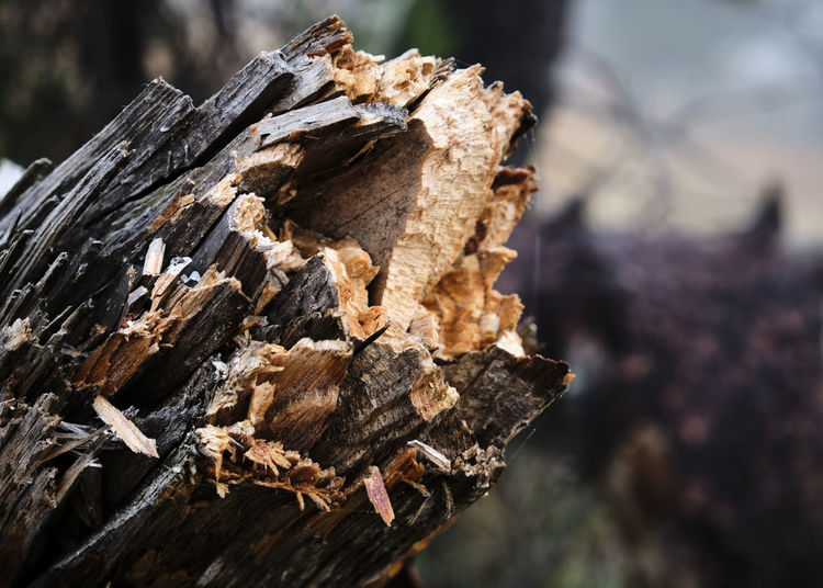 Close-up of logs on wood in forest