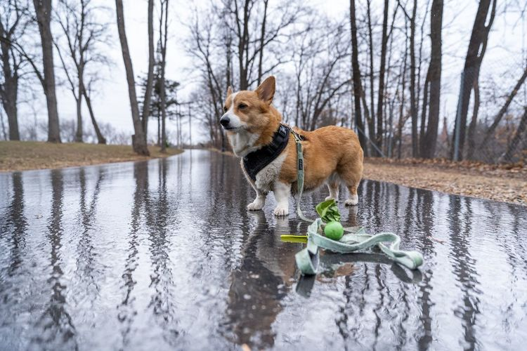 Dog looking away in a lake
