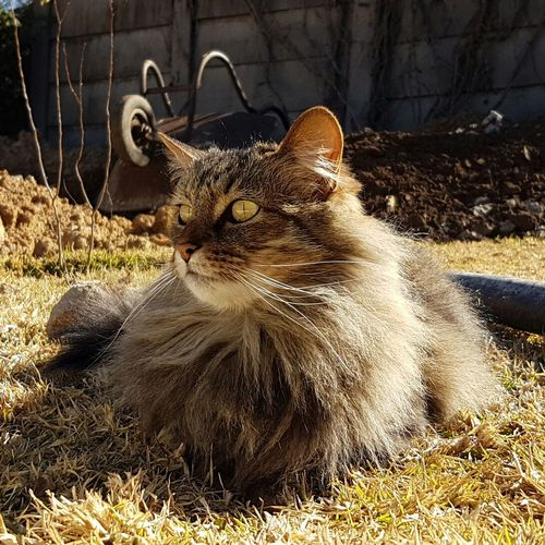 Catoftheday Cat♡ Cat Lovers 🐱💞 Enjoying Life Noeditnofilters African Skies South Africa Is Amazing South Africa Beautiful Design Caturday Chloe ❤