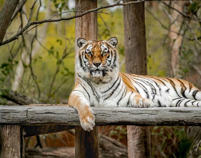 Portrait of cat in zoo