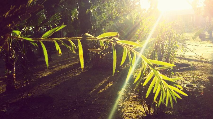 Light Falling Beauty In Nature Growth Leaf