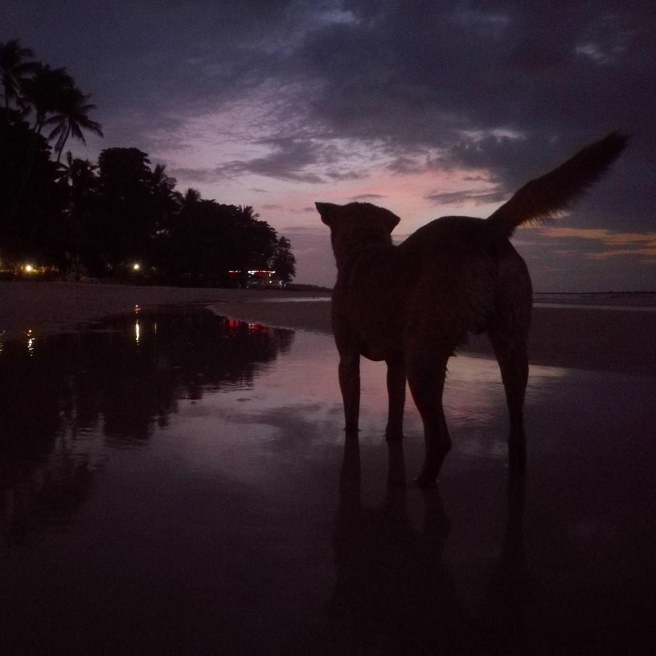 Silhouette Of Dog Standing In Water