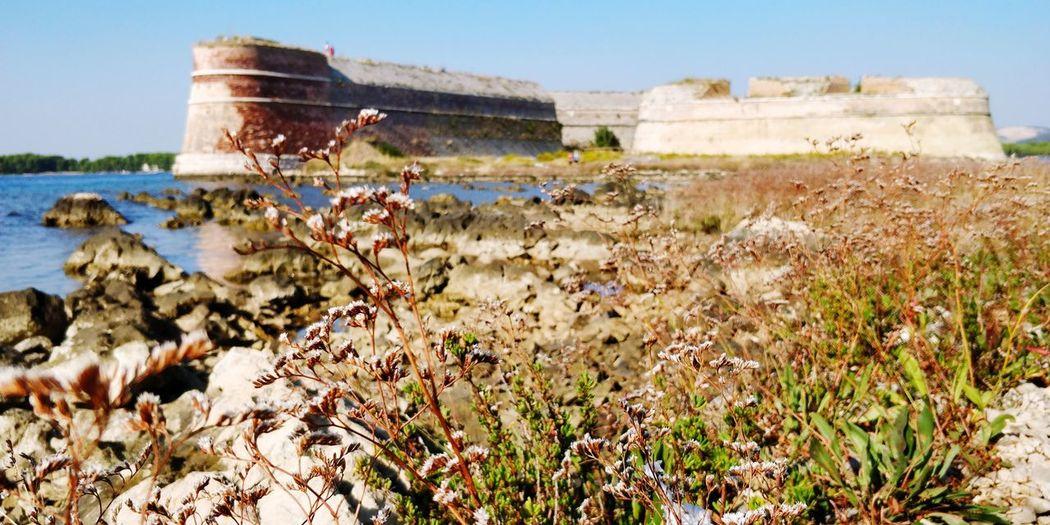 EyeEm Selects Flower Water Clear Sky Beach Sky Grass Plant Wildflower