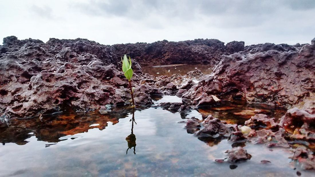 Nature Tree Water Sky Indianphotographer Greenery💛 Nature Vacations Cloud - Sky Rock Tree Life Between Rock New Life & New Hope Plants 🌱 Plants And Garden Plants Of Eyeem Rocks And Water Rocks And Minerals
