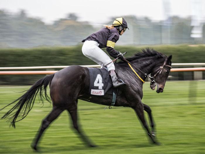 Animal Animal Themes Galope Galope Race Horse Horse Racing Jokey Racetrack