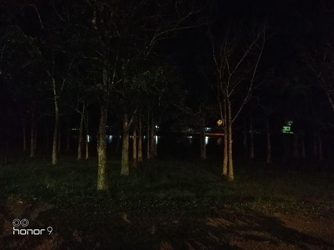 Teste com Honor 9 Tree Illuminated Winter Forest Cold Temperature Spooky Dark Sky