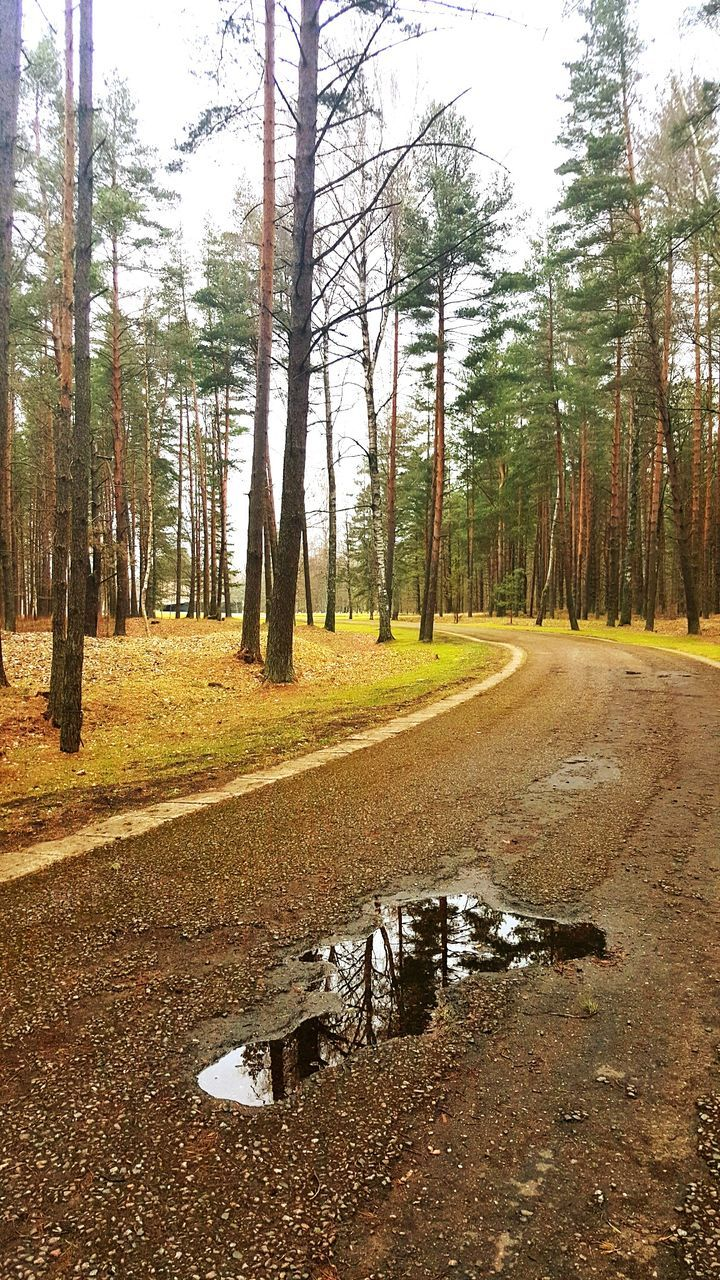 tree, forest, nature, tranquility, tranquil scene, no people, scenics, day, tree trunk, road, outdoors, landscape, growth, beauty in nature, sky
