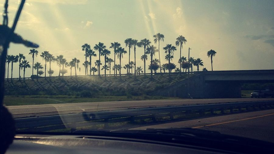 Palm Trees ❤❤