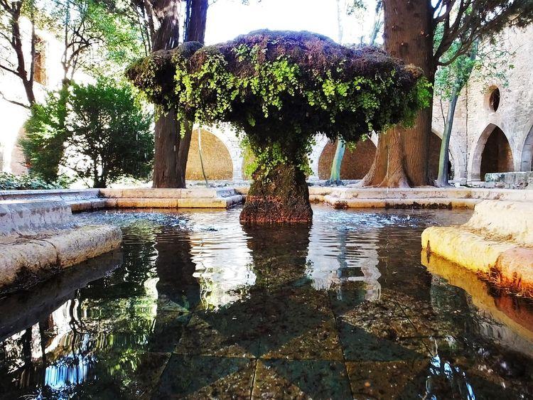 fuente Claustro Ceramics Catalunya Creative Diseño Fujifilm Finepix Hs50exr #fujifilm Water Reflection Tree Fountain Day Built Structure Architecture