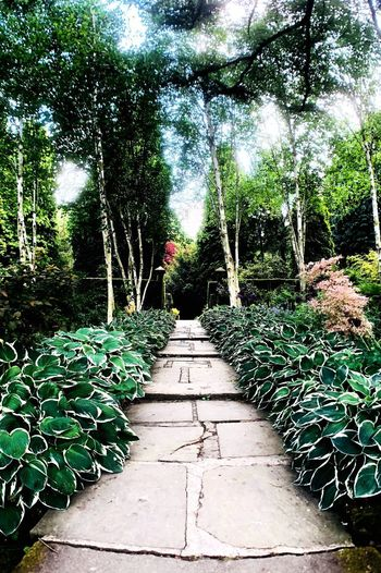 Yorkshire Hosta Leaves Plant The Way Forward Direction Tree Growth Nature No People Park - Man Made Space Architecture Park Outdoors Footpath Tranquility Diminishing Perspective Green Color Sunlight Garden