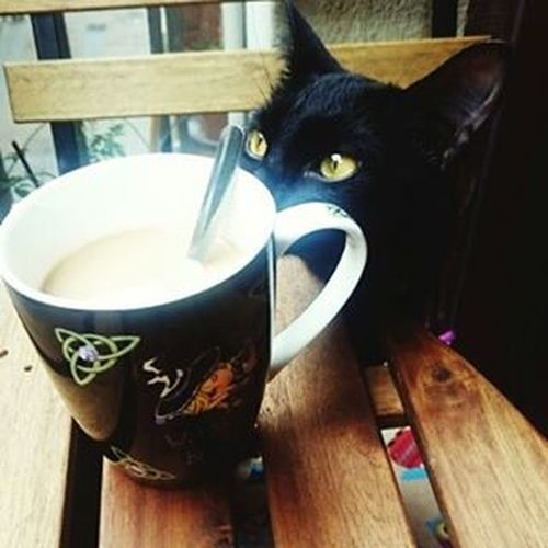 Coffee time Bestmeow Catoftheday Excellentcats Catlovers Bestcats_oftheworld Eyes Kittensofinstagram Kitten Like4like Photooftheday Picoftheday Meow_beauties Meowbox Catsofinstagram