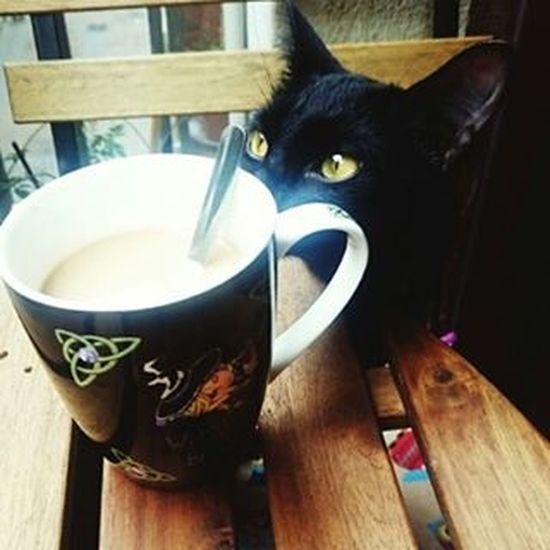 Coffee time Bestmeow Catoftheday Excellentcats Catlovers Bestcats_oftheworld Eyes Kittensofinstagram Kitten Like4like Photooftheday Picoftheday Meow_beauties Meowbox Catsofinstagram