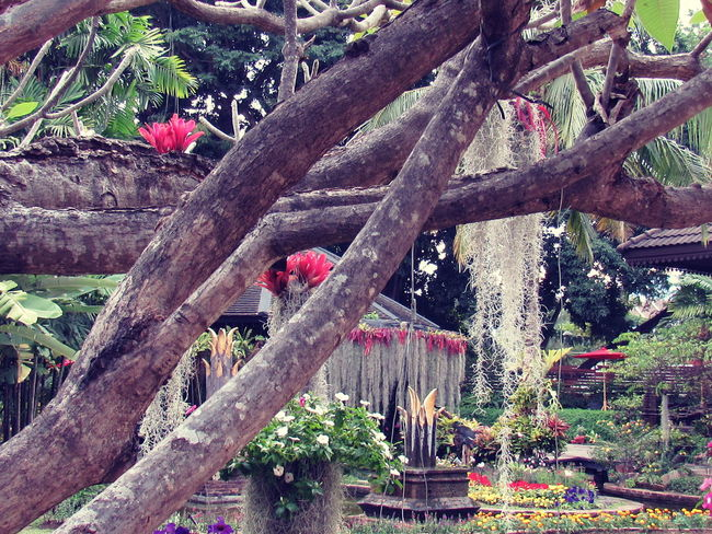 Chiangmai Animal Themes Beauty In Nature Branch Day Flower Growth Nature No People Outdoors Red Thai Garden Tree