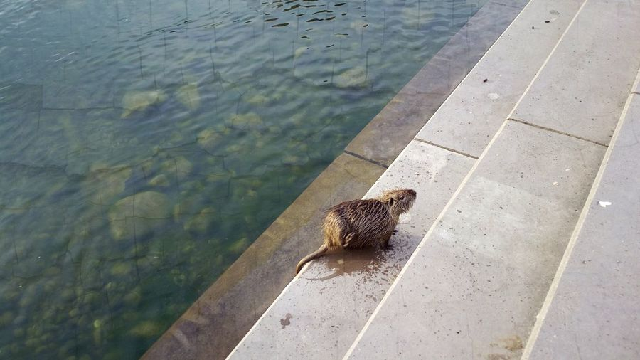 Animal Themes Day Footpath High Angle View Lakeside No People One Animal Paving Stone Pier Surface Level Tranquility Water