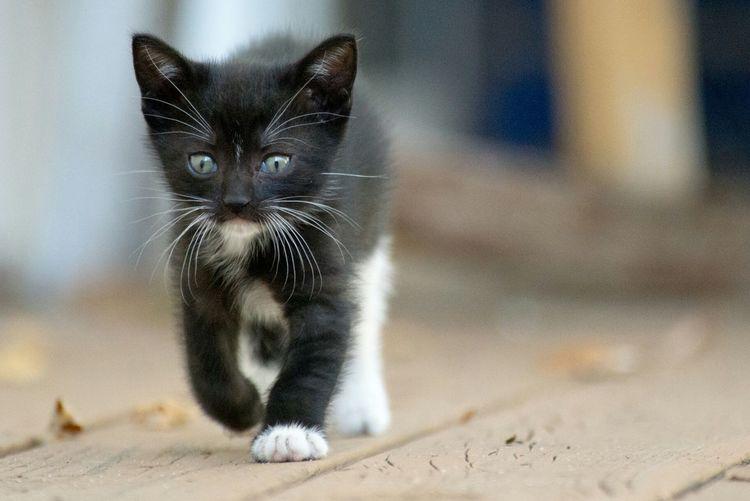Close-Up Of Black Kitten Walking On Boardwalk