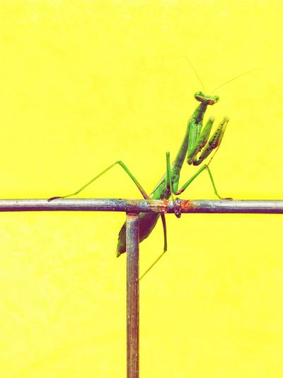 Close-up of insect on yellow wall