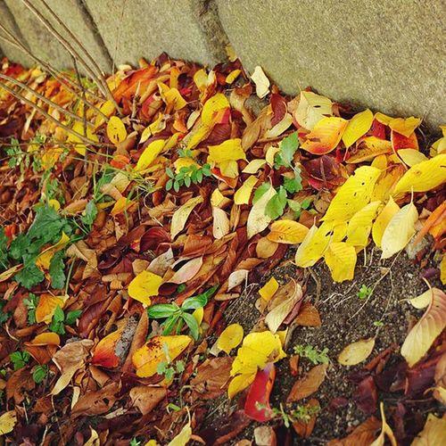 treasures are here! . Autumnlove Autumn Osakawalk Osakacastlepark Fall Fallenleaves Fallingleaves Japan Red Yellow Green 紅葉 😚 😚
