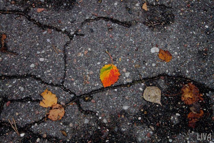 Autumn Autumn Colors Autumn Leaves Latvia Liepaja Karosta Street Streetphotography Street Photography Red The Week Of Eyeem EyeEm EyeEm Best Shots EyeEm Gallery EyeEmBestPics