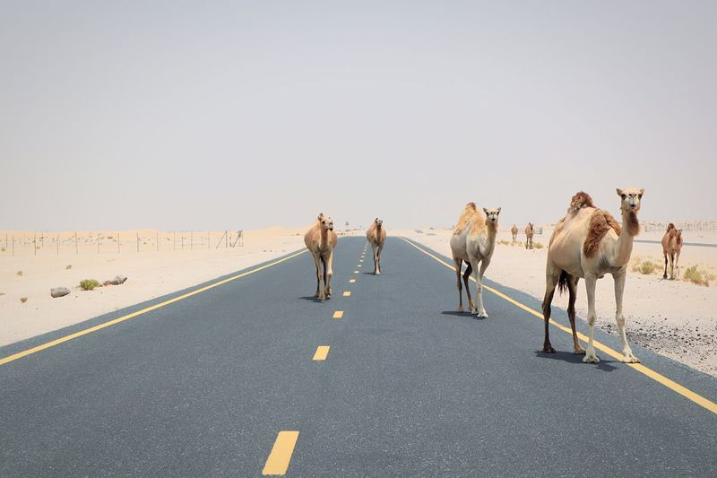 Group of people walking on road against clear sky