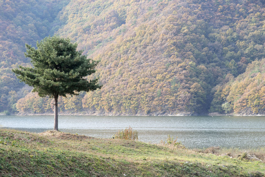 autumn landscape at Janggye Tourism Place in Okcheon, Chungbuk, South Korea Autumn Autumn River Janggye Okcheon Riverside Autumn Riverside Beauty In Nature Day Grass Growth Landscape Mountain Nature No People Outdoors Plant River Riverside Photography Scenics Tranquil Scene Tranquility Tree Water