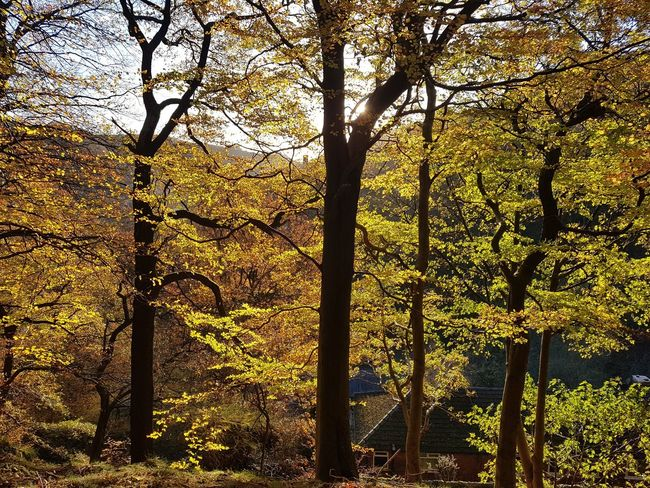 Low Angle View Tree Nature No People Sky Outdoors Day Beauty In Nature Full Frame Tree Trunk Forest Growth Close-up Yorkshire Sunlight WoodLand Calderdale Eaves Wood Mytholm Branch Backgrounds Tranquility Beauty In Nature Autumn Tree