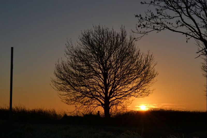 sometimes in life we stand alone Sunrise Tree Sky_collection Eye4photography  Nature