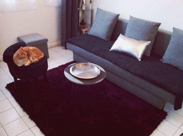 Home Sweet Home Cat♡ Neuillysurseine First Eyeem Photo