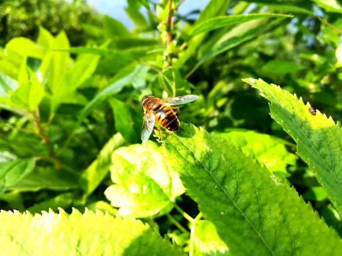 Bee Flower Leaf