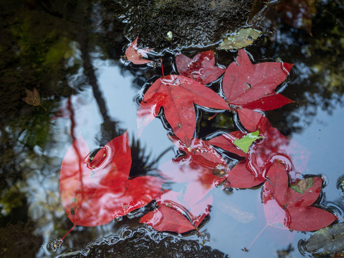 High angle view of autumn leaves floating on lake