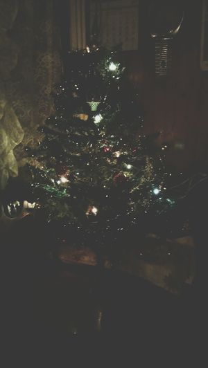 merry christmas to those who celebrate christmas today. merry christmas eve :) Christmas Tree Christmas Eve Badnjak
