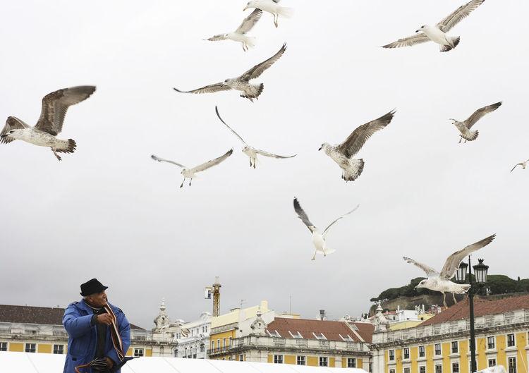 Flying Bird Animal Sky One Person Outdoors Lisbon Lisboa Portugal Traveling Freedom Animal Themes EyeEmNewHere