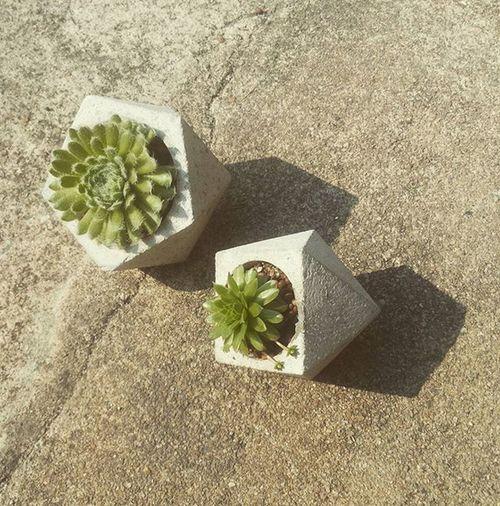 เ ล็ ก - ใ ห ญ่ ป ล า ย แ ห ล ม กระถาง กระถางปูน กระถางปูนเปลือย กระบองเพชร ไม้อวบน้ำ Dib_te DIY Design Handmade Loft Livingplanet Plant Plants Planter Planters Garden Gardens Gardener Gardeners Cactus Cactusthai Cactusthailand Cactusclub Cactusmagazine Cacti seculents saculent