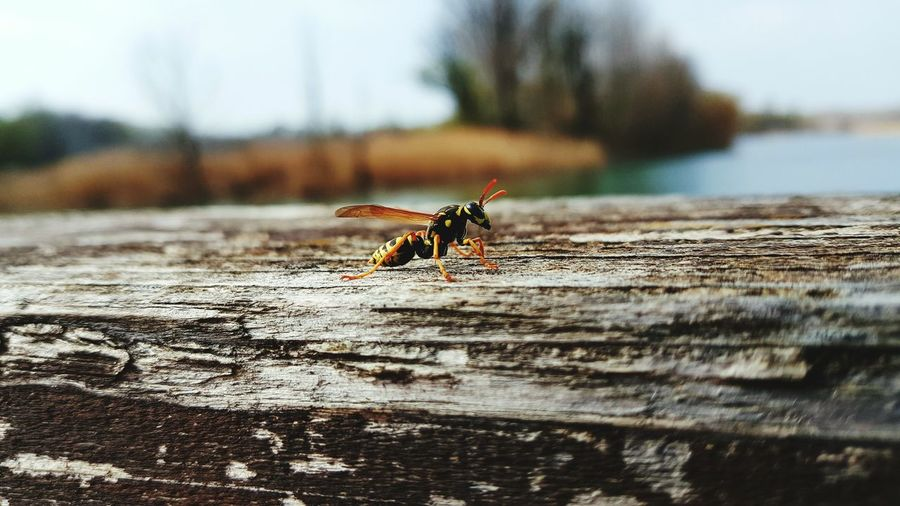 Close-up of hornet on log at forest