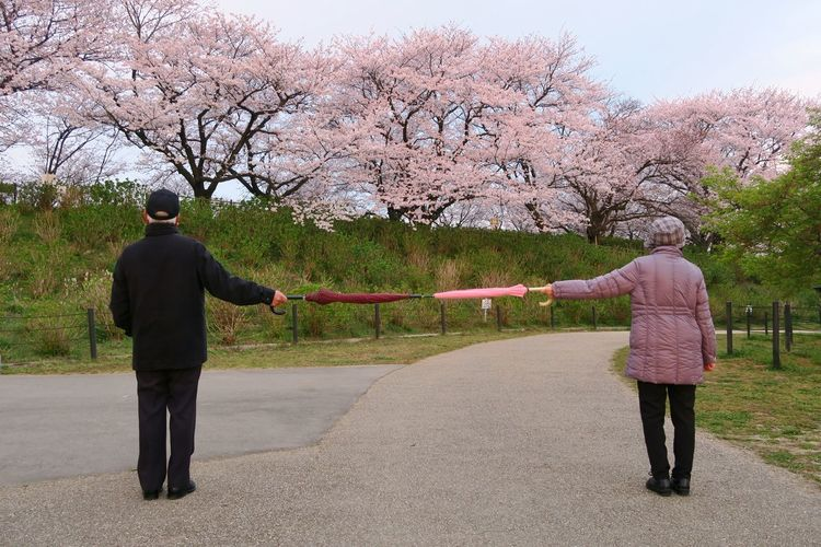 Rear view of man standing by cherry blossom
