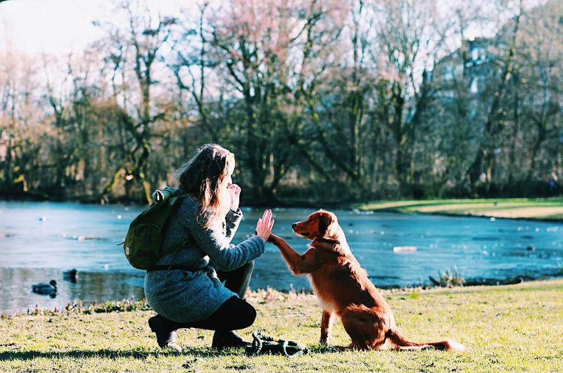 High five! Nova Scotia Duck Tolling Retriever Comfort Mammal Friendship Treat Learning Dog School Puppy Training Dog Pets One Animal Bonding Animal Themes Friendship Animal Domestic Animals Young Adult Adult People Happiness Day Leisure Activity Lake Outdoors Tree Love Yourself EyeEmNewHere