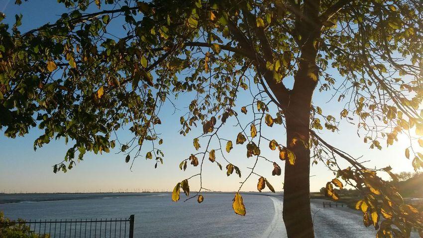 Autumn in Tönning (Nordfriesland) Abendstimmung Nordfriesland Eider Eiderstedt River Tree Colors Of Autumn Autumn Colors