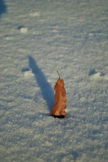 December EyeEmNewHere Frozen Hungary Nature Visegrád-Hungary Winter Wintertime Autumn Beauty In Nature Change Close-up Cold Temperature Colorful Day Dry First Day Of December Frozen Frozen Nature Leaf Lovewinter Maple Maple Leaf Nature No People Outdoors Snow The First Snow Valentinamilkovics Weather Winter