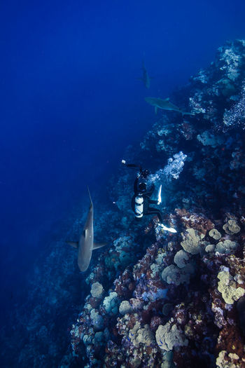 High Angle View Of Scuba Diver And Sharks Swimming Underwater