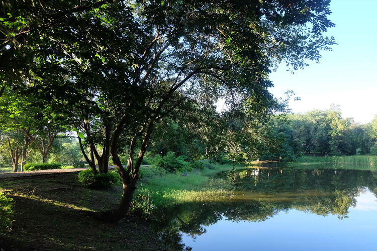 Tree Plant Tranquility Water Lake Nature Beauty In Nature Reflection Tranquil Scene Growth Day No People Scenics - Nature Sky Forest Land Green Color Trunk Landscape Outdoors
